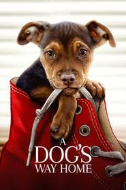 A Dog's Way Home 2019 123movies